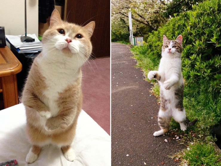 funny-standing-cat4.jpg