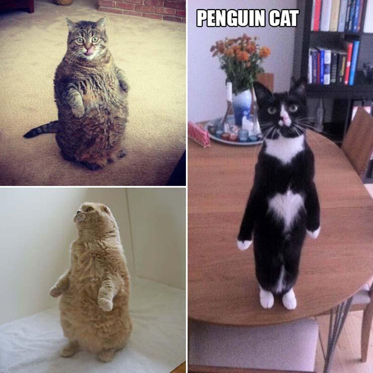funny-standing-cat6.jpg