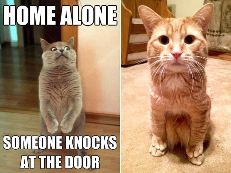 funny-standing-cat8.jpg