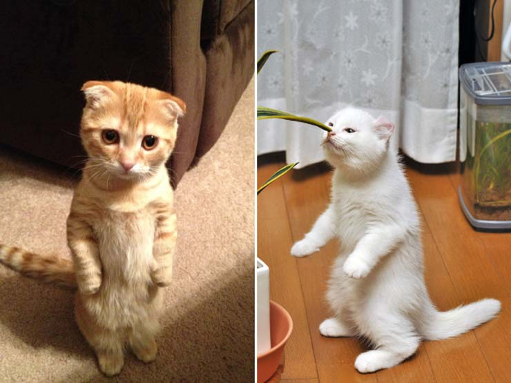 funny-standing-cat9.jpg