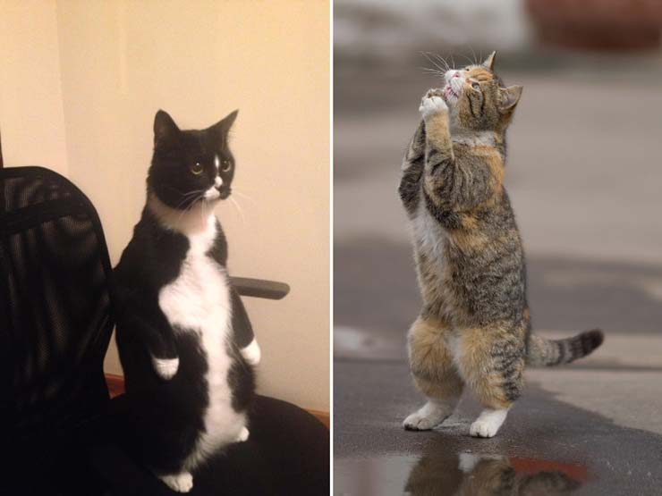 funny-standing-cat11.jpg