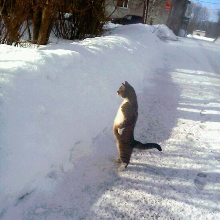 funny-standing-cat13.jpg