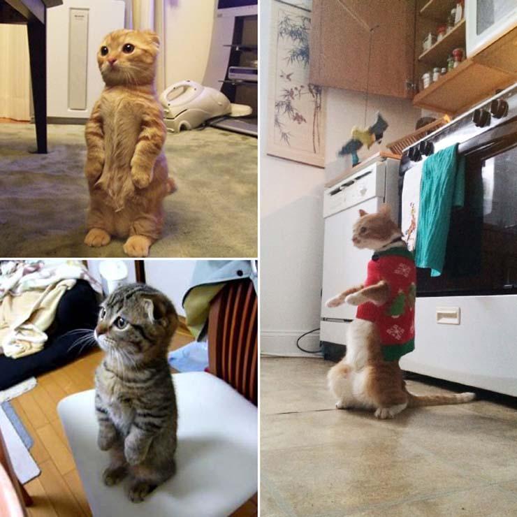 funny-standing-cat17.jpg