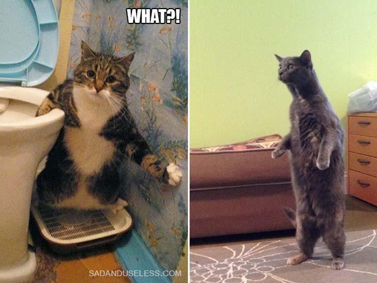 funny-standing-cat18.jpg