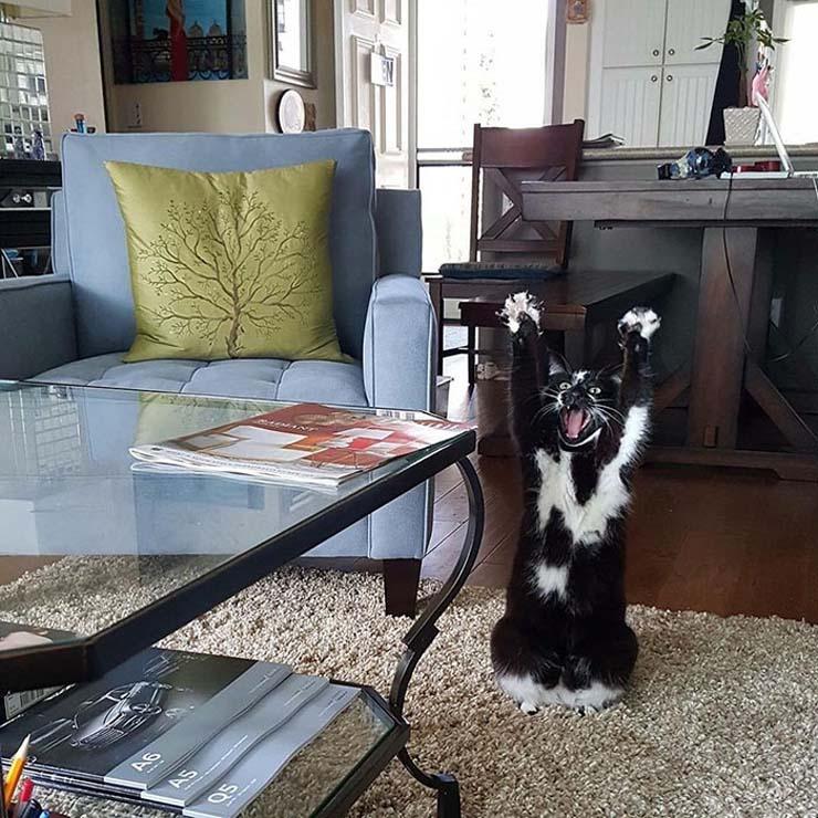 standing-cat-keys-goal-kitty-2.jpg