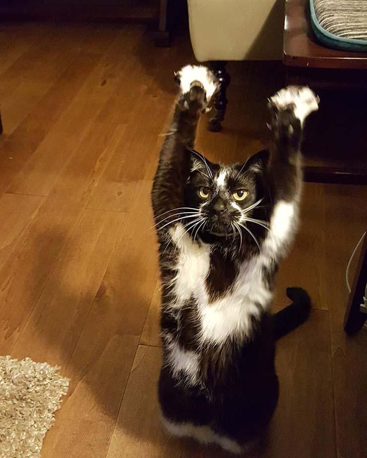 standing-cat-keys-goal-kitty-4 copy.jpg