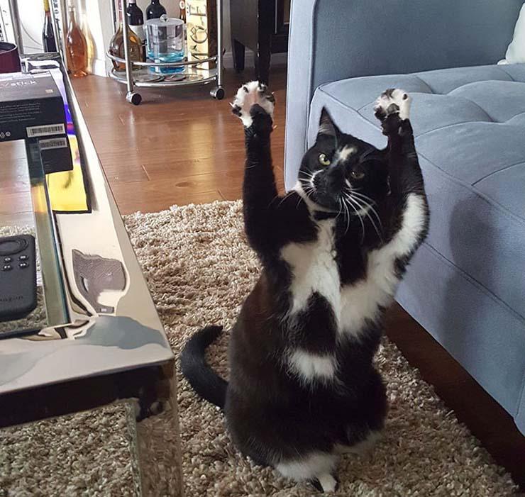 standing-cat-keys-goal-kitty-5.jpg