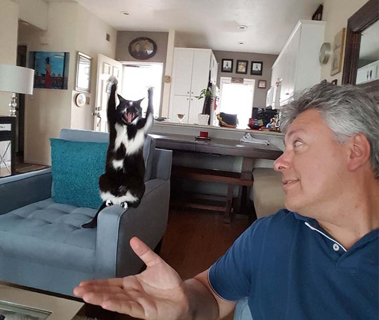 standing-cat-keys-goal-kitty-6.jpg