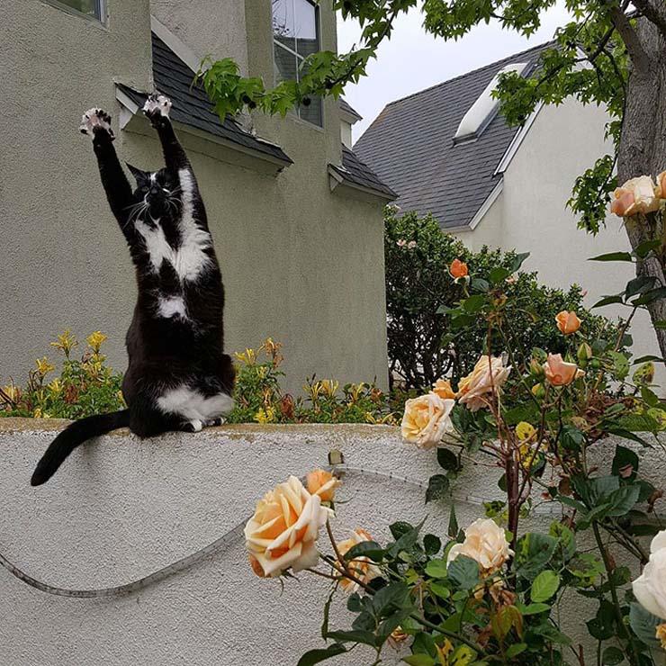 standing-cat-keys-goal-kitty-10.jpg