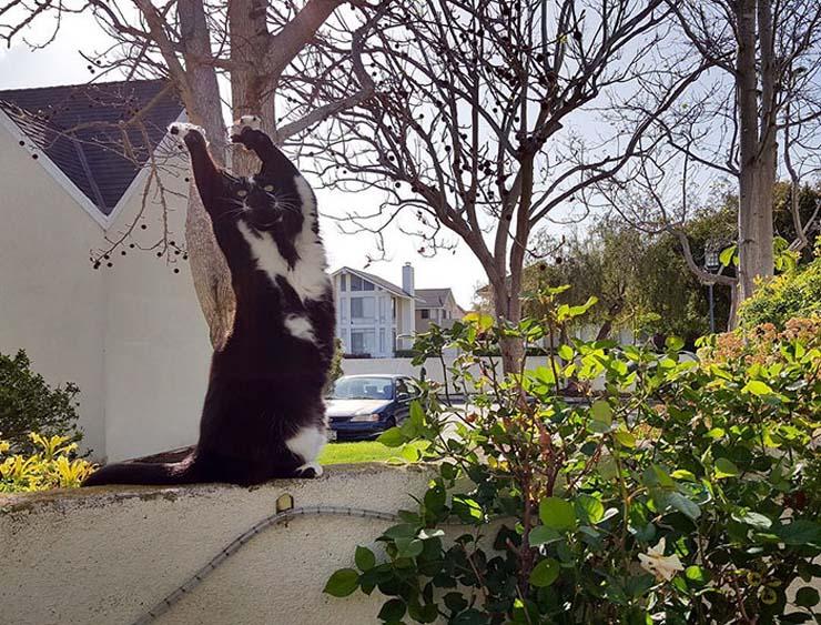 standing-cat-keys-goal-kitty-17.jpg