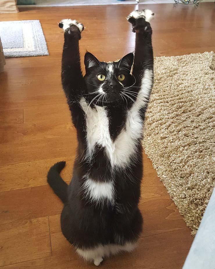 standing-cat-keys-goal-kitty-23.jpg