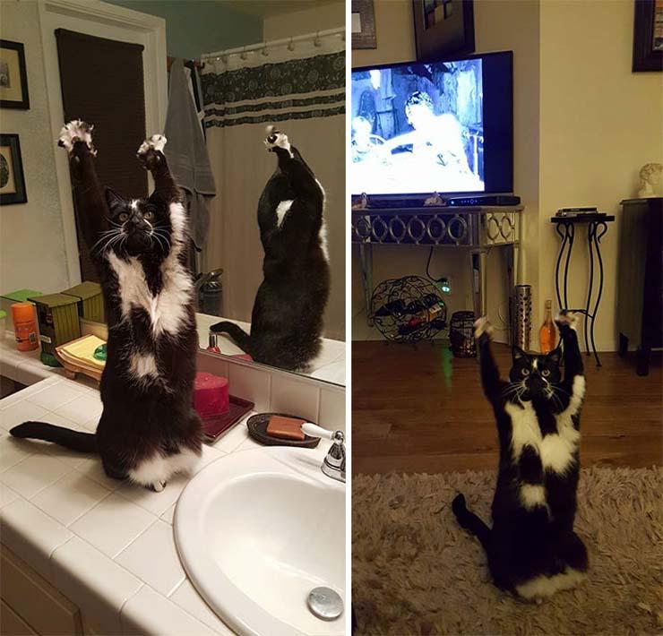 standing-cat-keys-goal-kitty-27.jpg