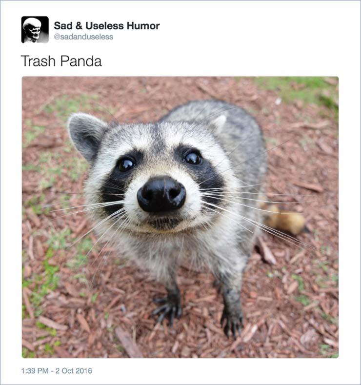 name-panda.jpg