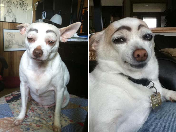 eyebrows1.jpg