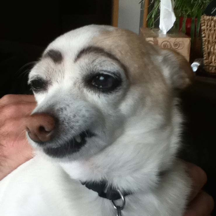 eyebrows13.jpg