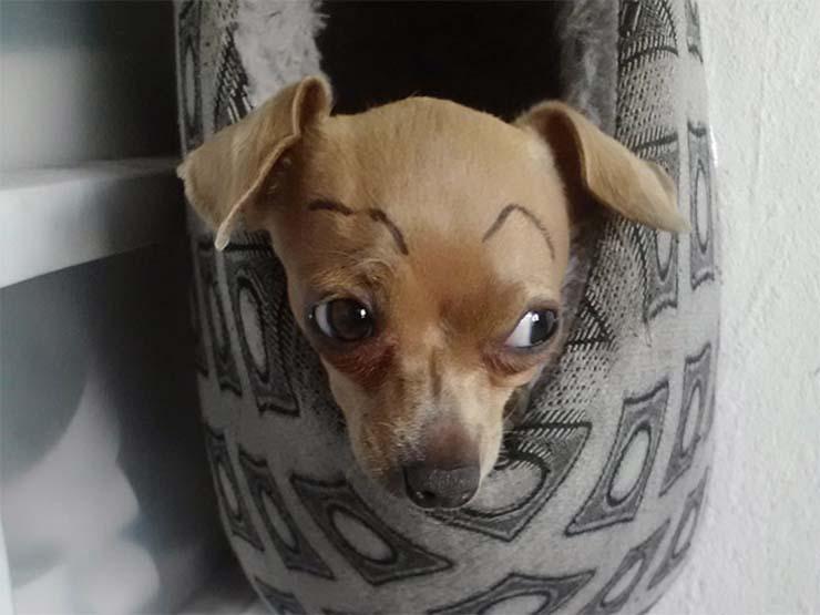 eyebrows15.jpg
