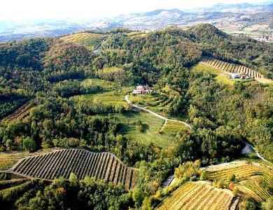 venica vineyard.jpg