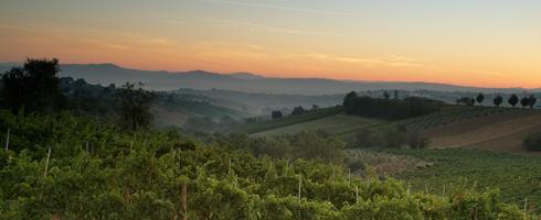 Campania - Taurasi