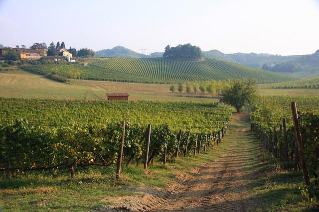 Piedmont - Gavi