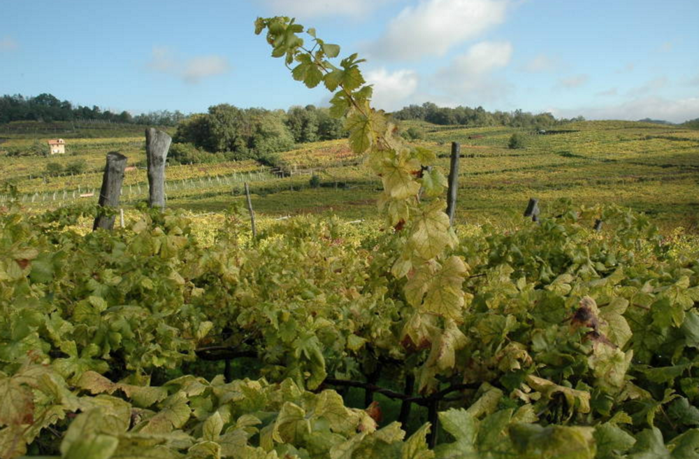 Piedmont - Erbaluce di Caluso