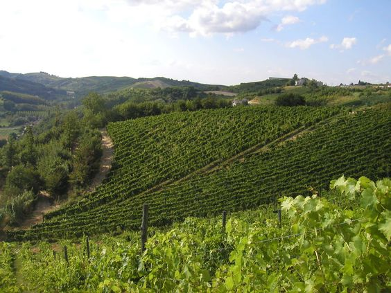 Piedmont - Dolcetto D'Acqui