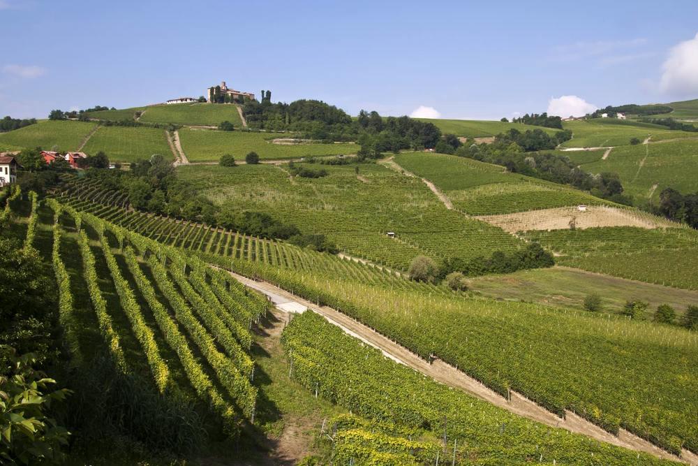 Piedmont - Dolcetto d'Alba