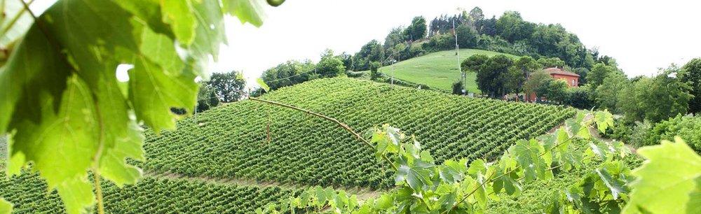 Emilia-Romagna - C. Bol. Pignoletto