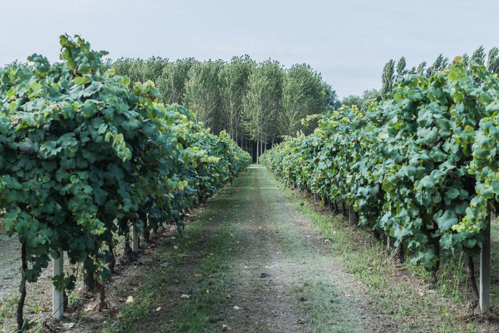 Emilia-Romagna - Lambrusco di Sorbara