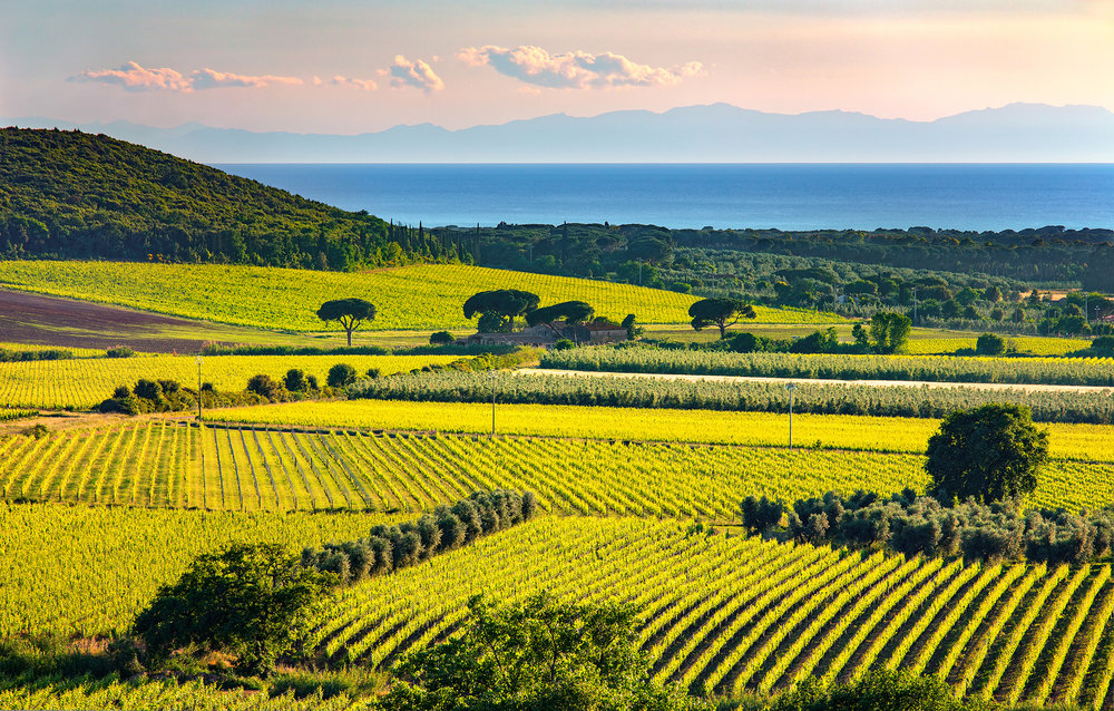 Tuscany - Bolgheri