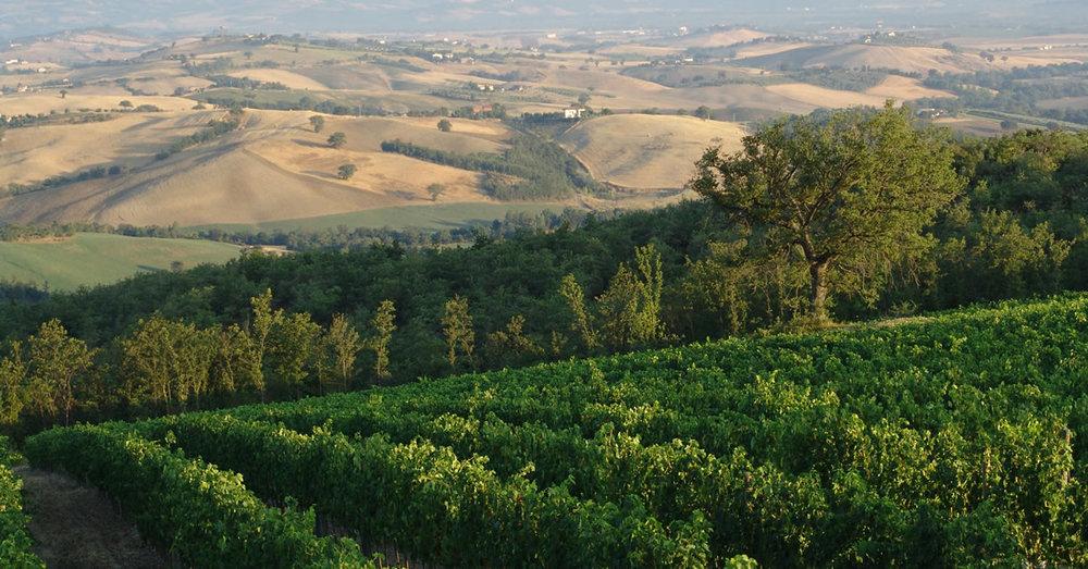 Tuscany - Montecucco