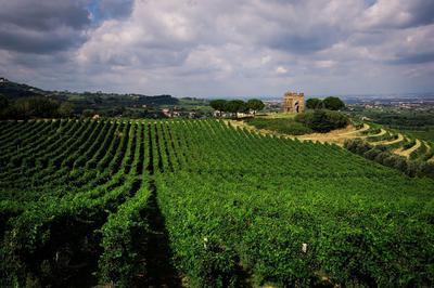 Lazio - Frascati