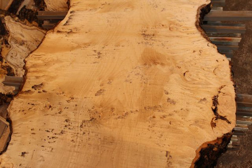 Burr maple, close-up of 60mm width slab.