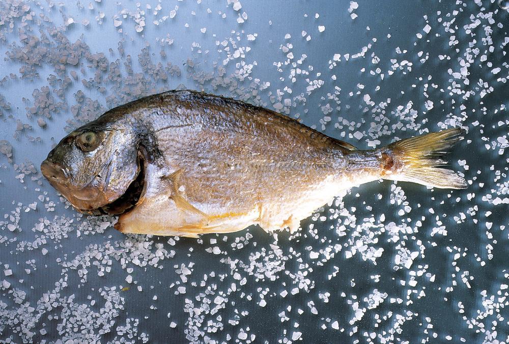 icex fish.jpg
