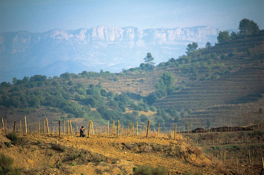 Priorat Wine Trips