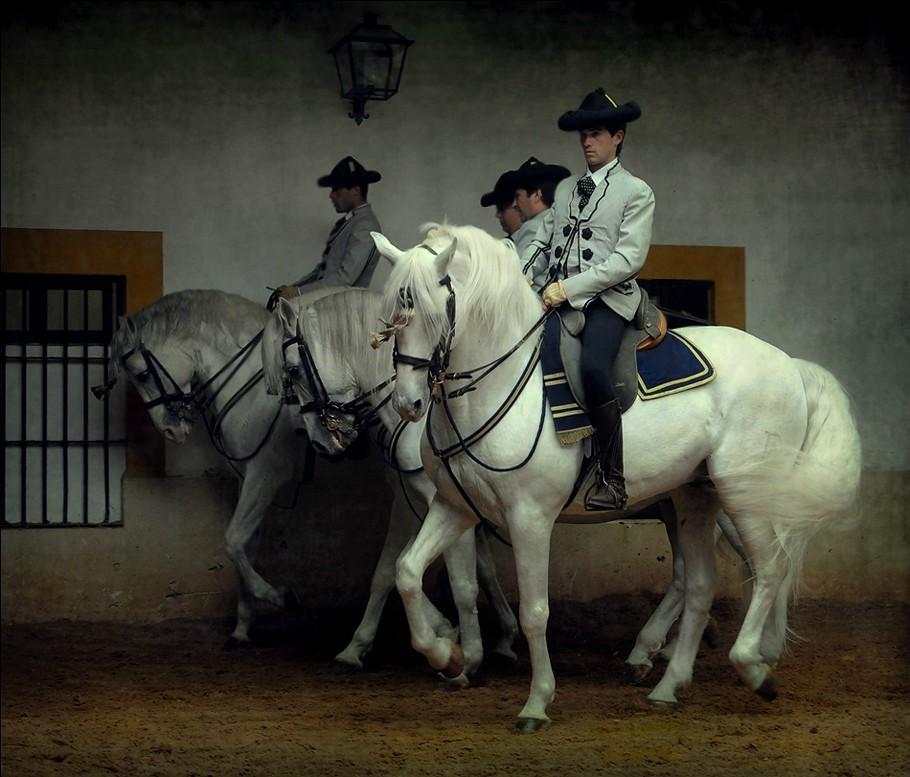 jerez-spanish-horse