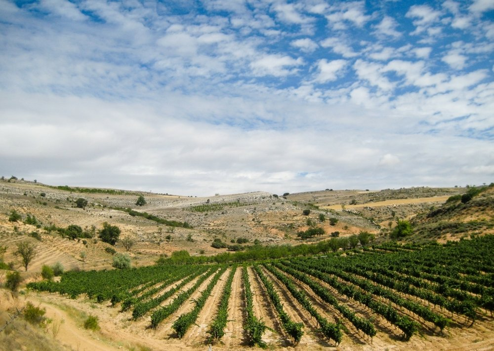 ribera_del_duero-vineyards.jpg