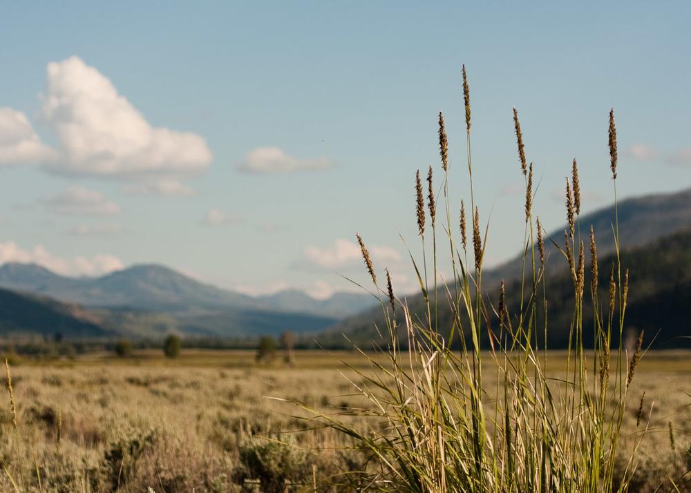 landscapes002.jpg