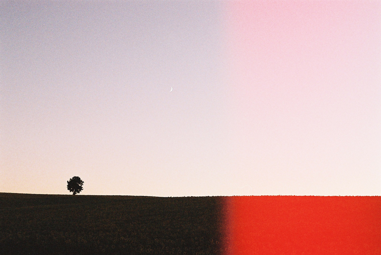 lonely tree & moon, Loubès-Bernac, France 2013 (Canon A-1)