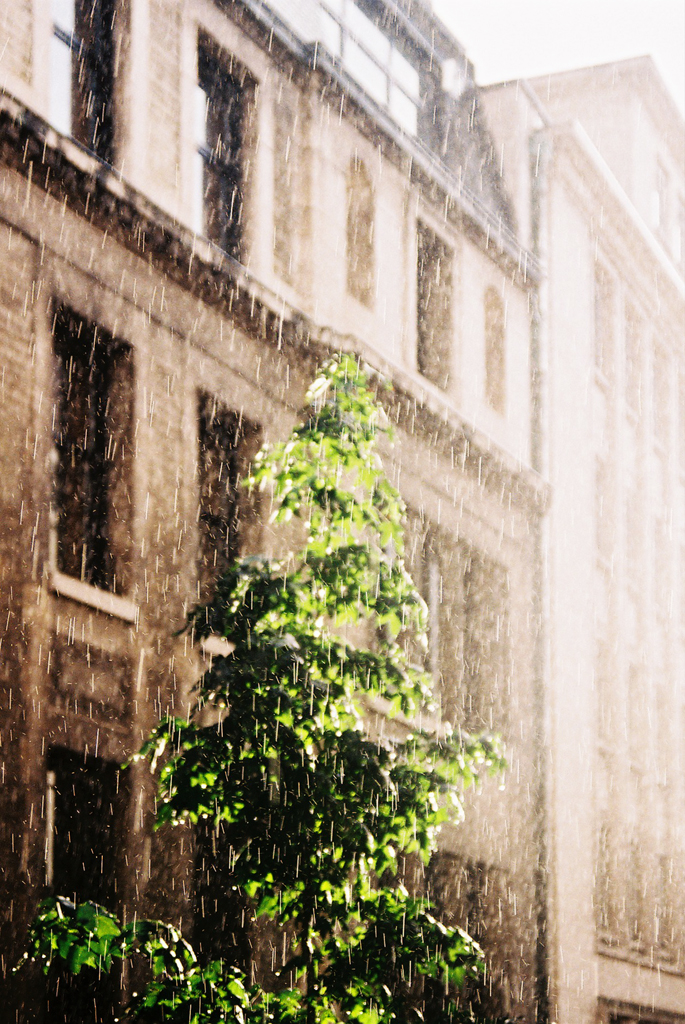 Brussels weather, 2013(Olympus OM-1)