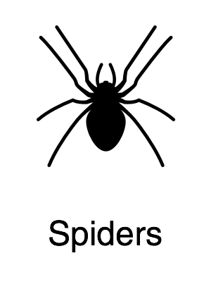 Spiders - Navigation@2x.jpg
