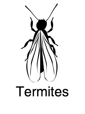 Termites - Navigation@2x.jpg