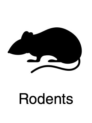 Rodents - Navigation@2x.jpg