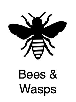 Bees & Wasps - Navigation@2x.jpg