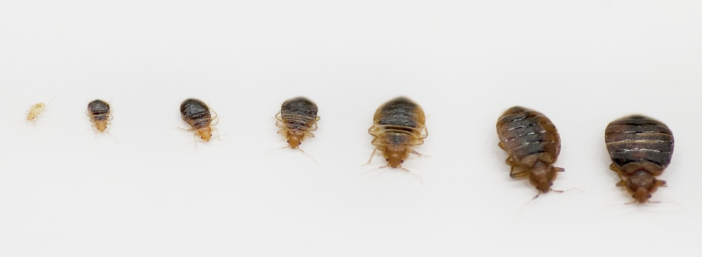protecting yourself from bed bugs during the holidays