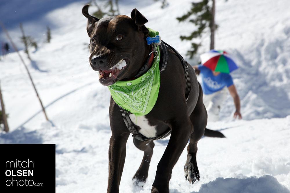 Snowlake-6.jpg