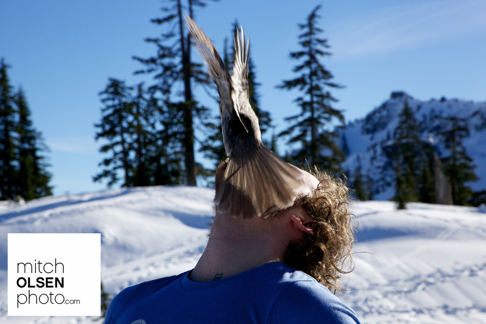 Snowlake-22.jpg
