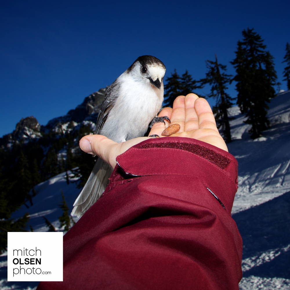 Snowlake-44.jpg