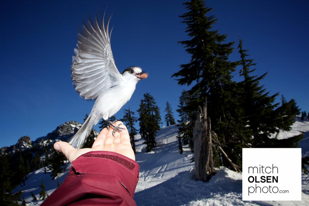 Snowlake-46.jpg