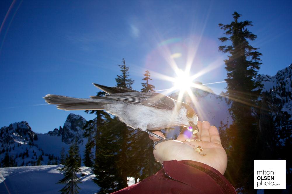 Snowlake-48.jpg