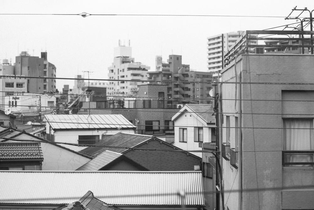 Tokyo&Zoo-289.jpg